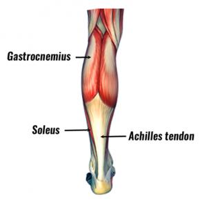 calf-muscles401